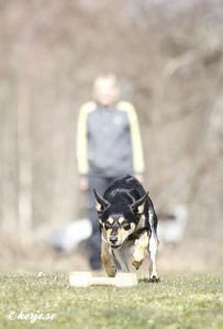 Hundträning pågår