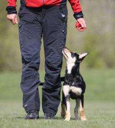 Vem är du för din hund-Zlatan eller……